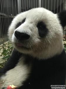 panda center 2