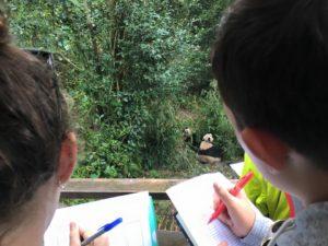 bcs-panda-observation-oct-2016