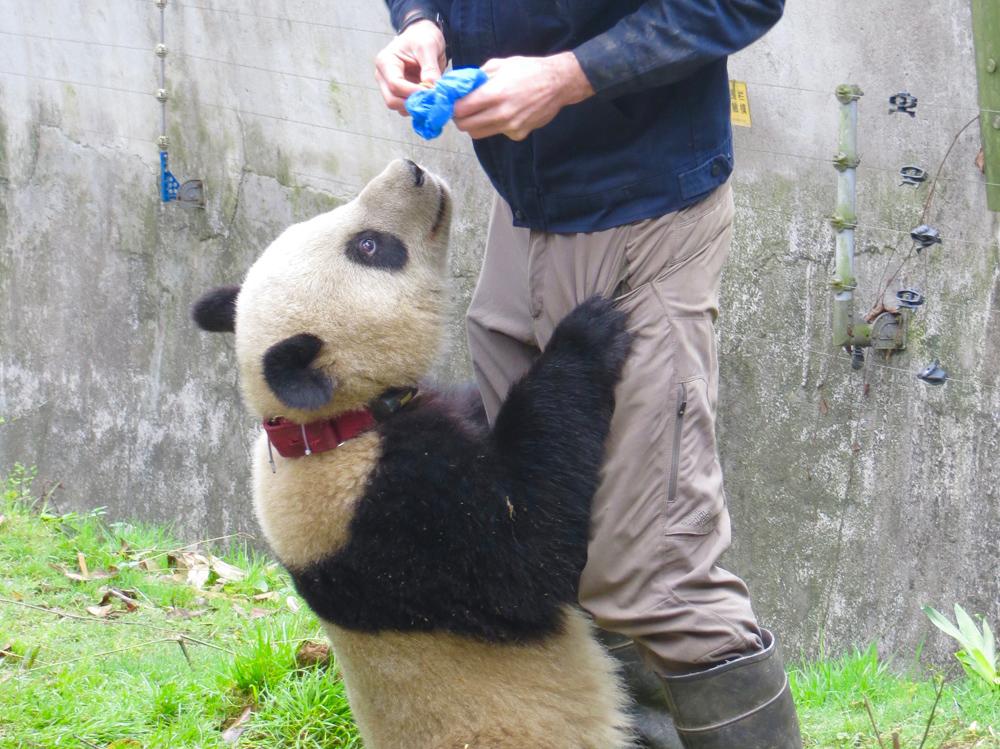 The pandas were fabulous
